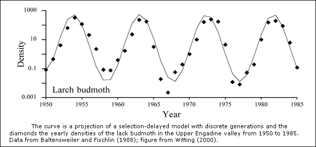 Larch budmoth density cycle